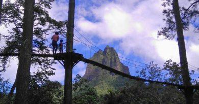 Le premier parc accrobranche de Polynésie ouvre à Moorea